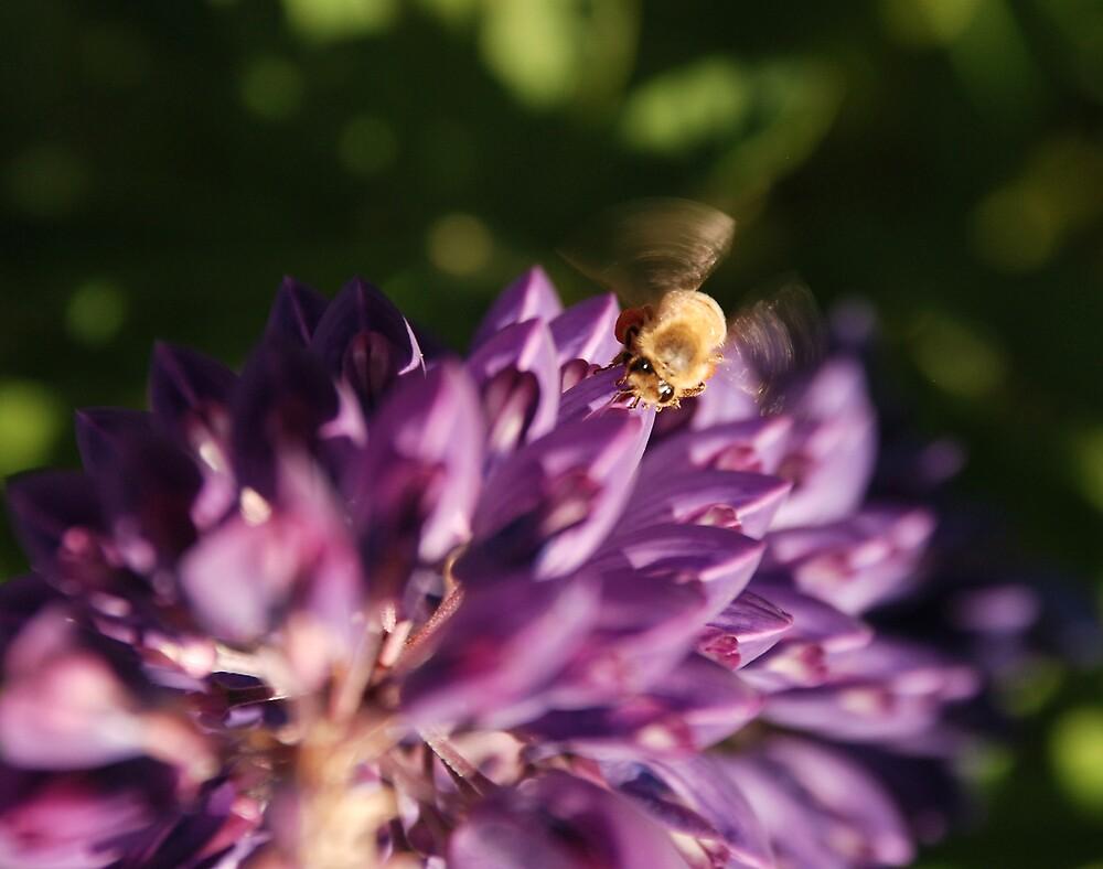 Bee 1 by AlisonOneL
