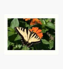Eastern Swallowtail Art Print