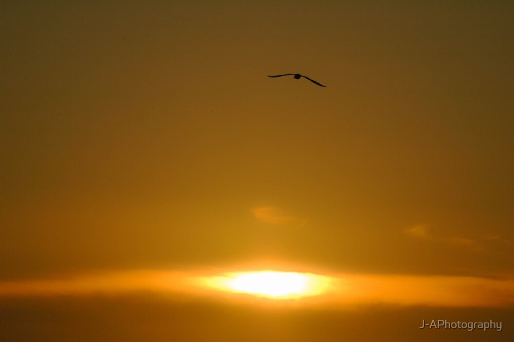 Flying by J-APhotography