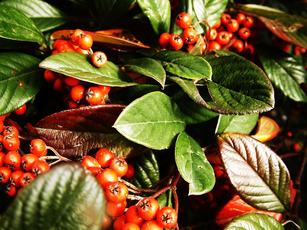Berries by AlisonOneL