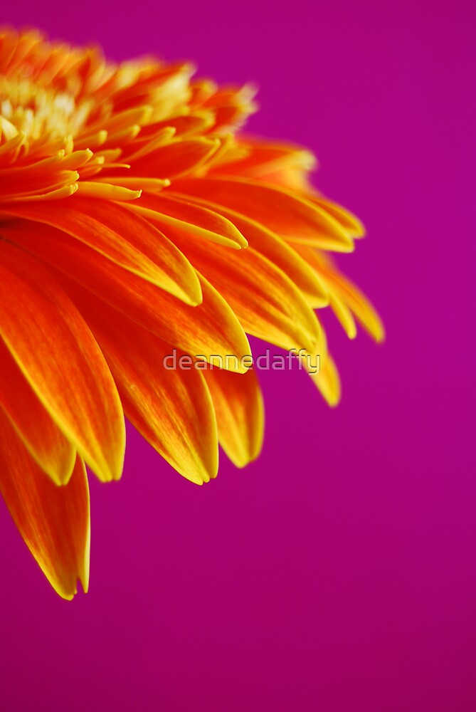 On Pink by deannedaffy