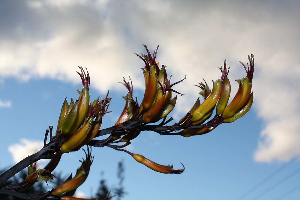 New Zealand Flax by tazsnaps