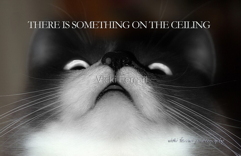 There's Something On The Ceiling © Vicki Ferrari by Vicki Ferrari