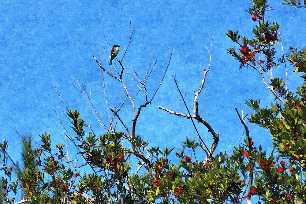 Blue Bird In A Holly Tree - Artistic by jtrommer