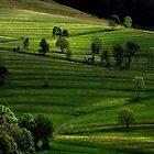 Spring ... Black Forest Germany by Angelika  Vogel