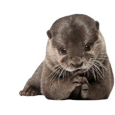 Otter by NominC