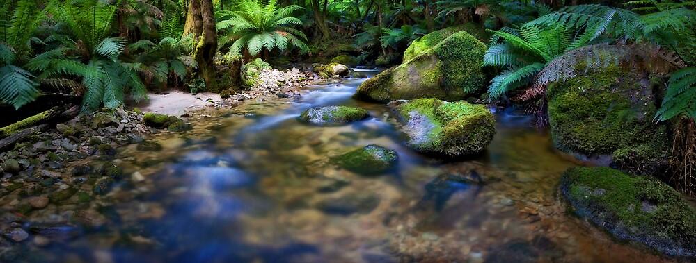 Creek by Lindsay Knowles