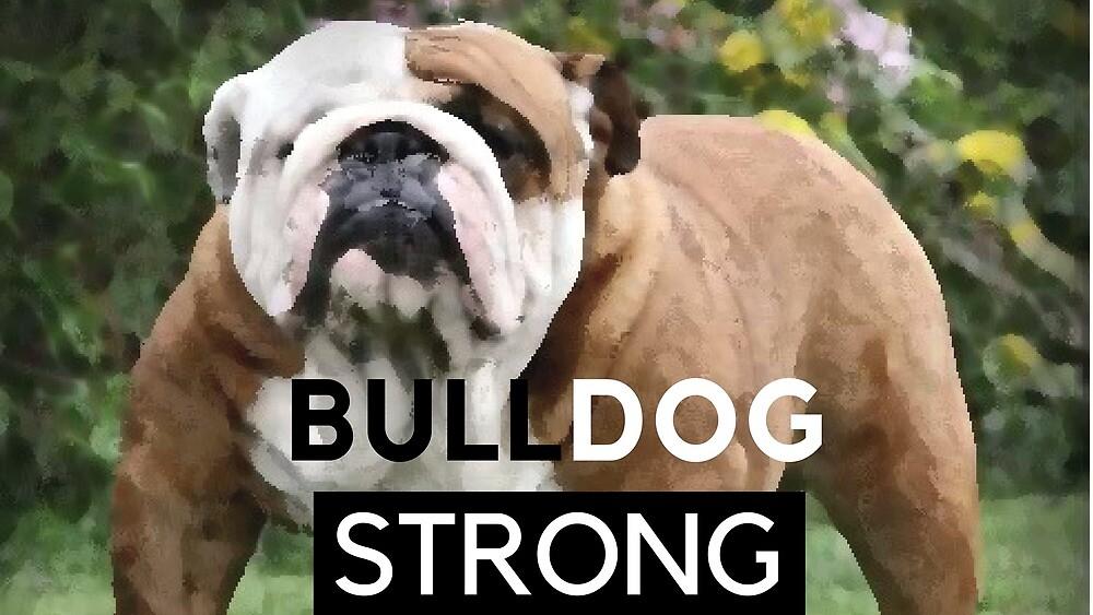 Bulldog Strong by Santo Trafficante