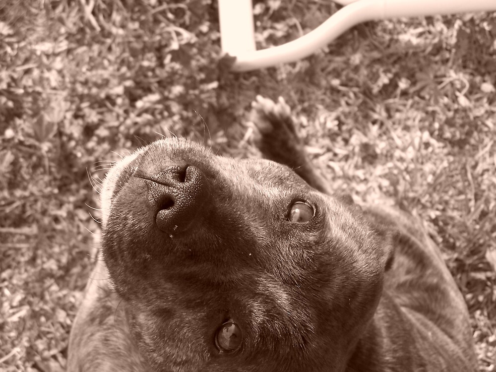 Staffie in sepia by Sleeva