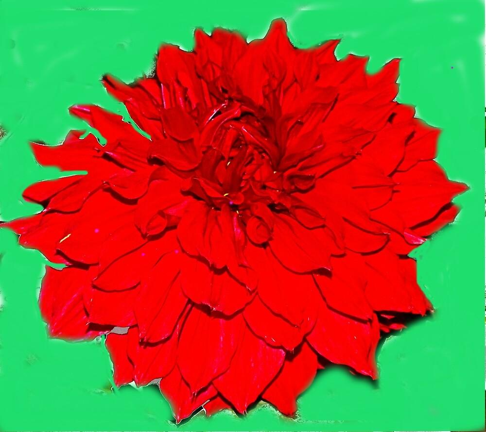 Red flower by Nilu Mishra