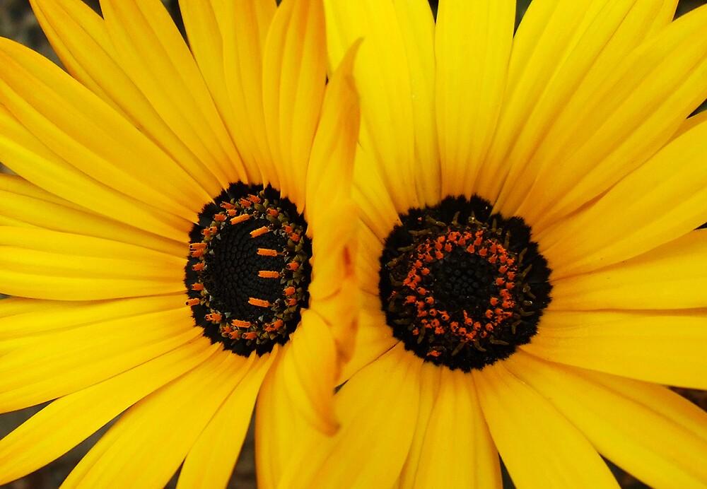 Daisy Twins by AlisonOneL