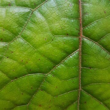 Micro leaf by spudbog
