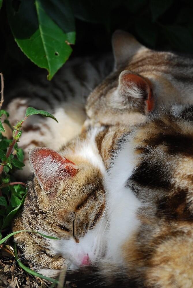Two Cats Sleeping by jojobob