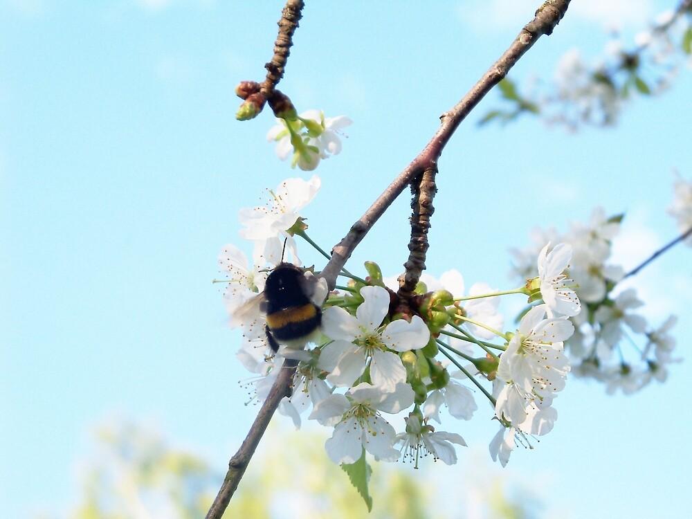 Bumblebee by ViktoriaB