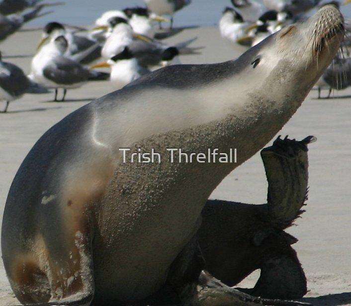 itch by Trish Threlfall