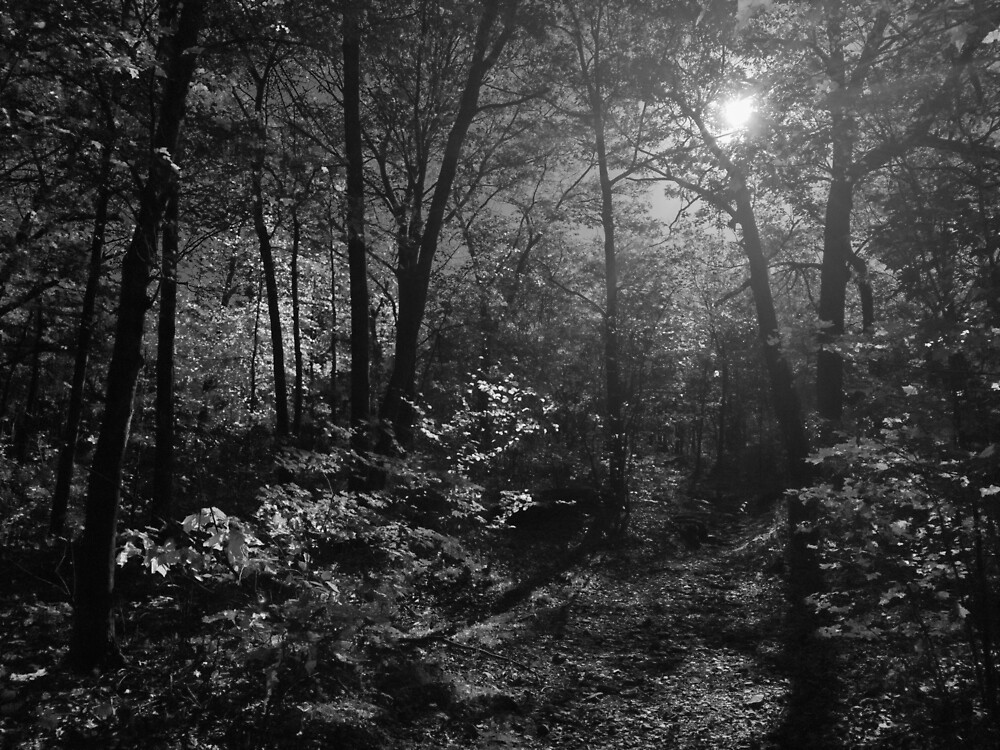 Green Hill Park Woods by Gary Hoare