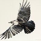 Crow Study by David Caesar