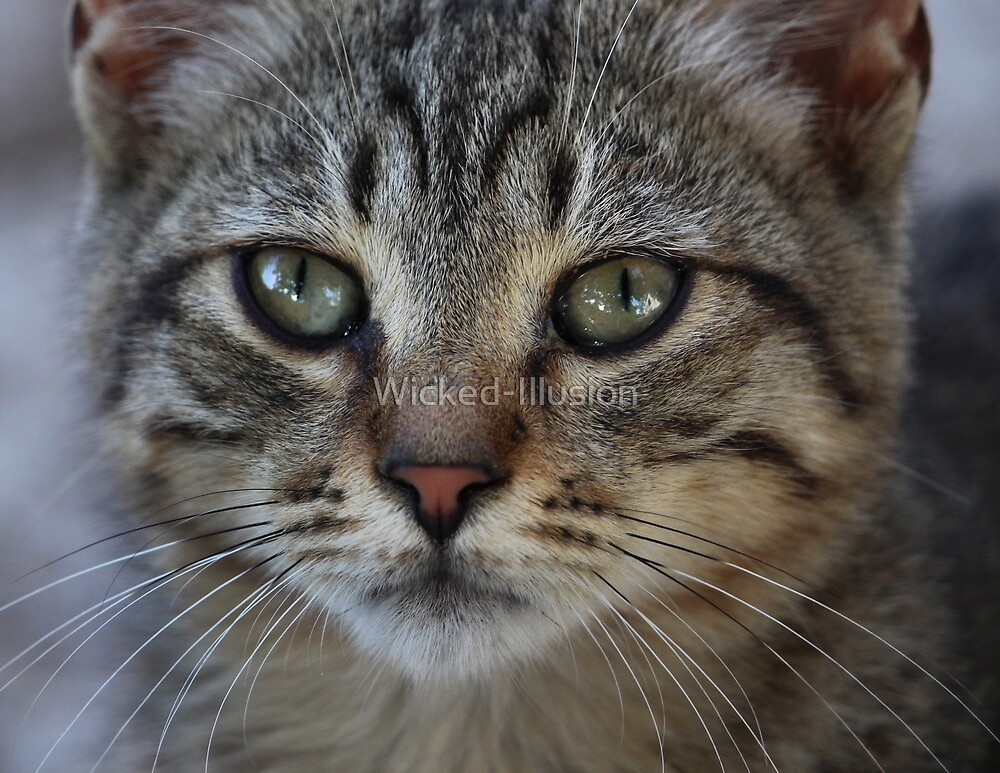 Kitty Face by Wicked-Illusion