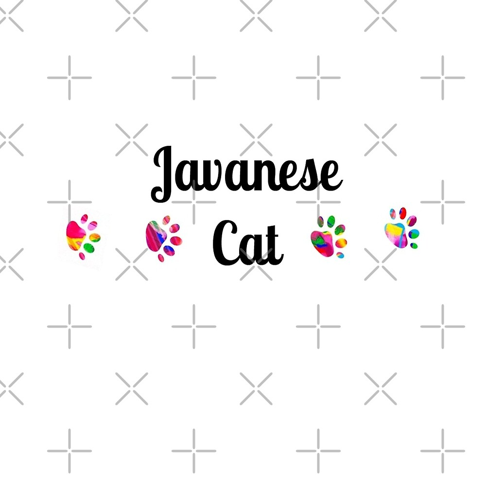 Javanese Cat -  star quality by myfavourite8