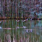 A Flock Of Seagulls by Cynthia48