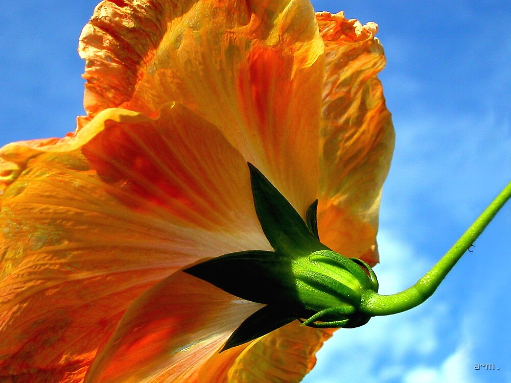 ~Hibiscus~ by a~m .