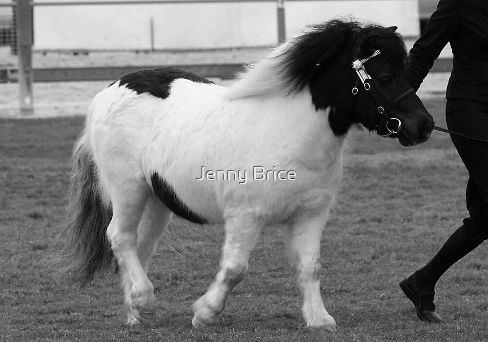 Black & White Pony In Black & White by Jenny Brice