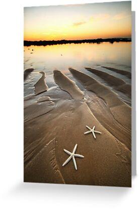 Two Little Starfish by Annette Blattman