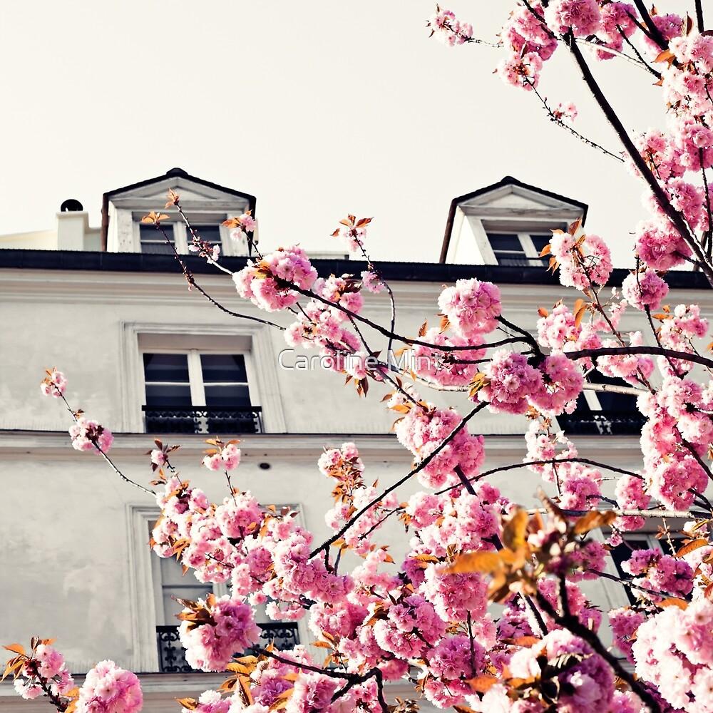 Paris Cherry Blossoms by Caroline Mint