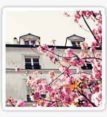 Paris Cherry Blossoms Sticker