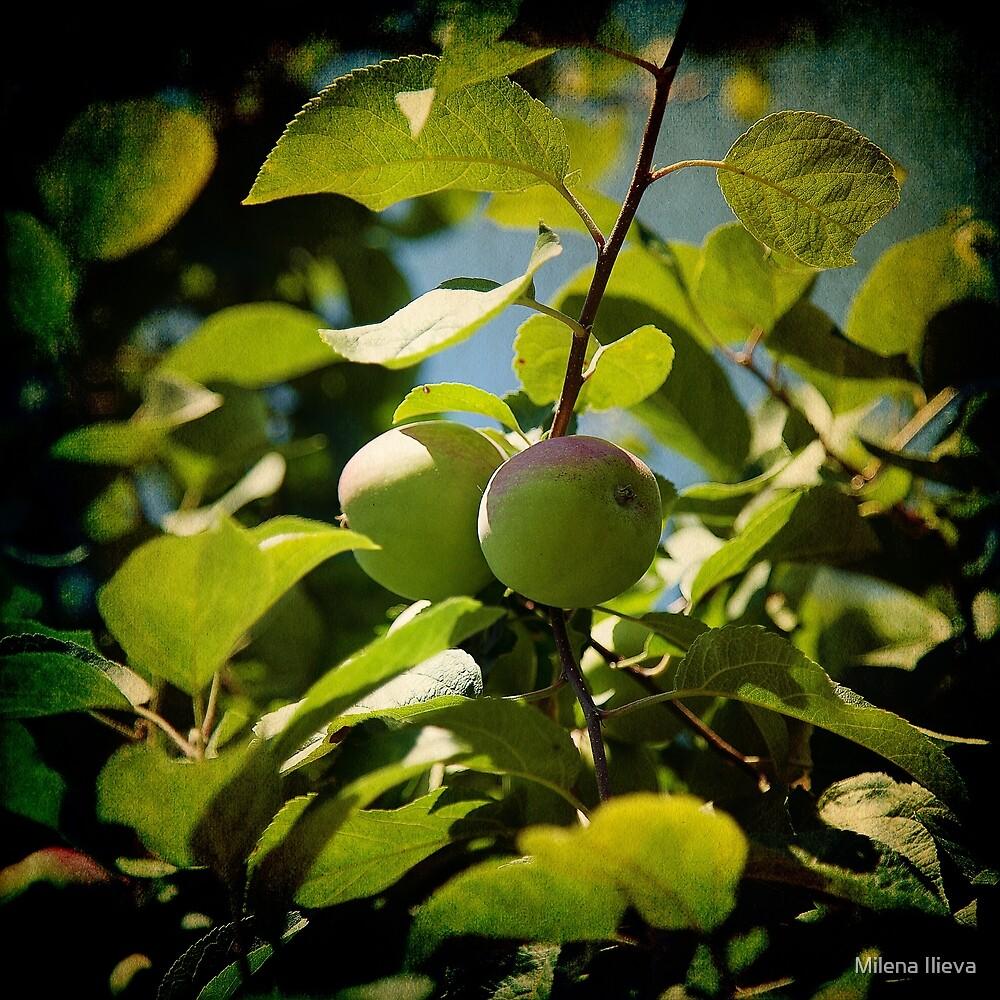 Apple tree by Milena Ilieva