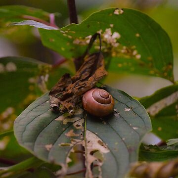 Snailing Around by LittleRedLens