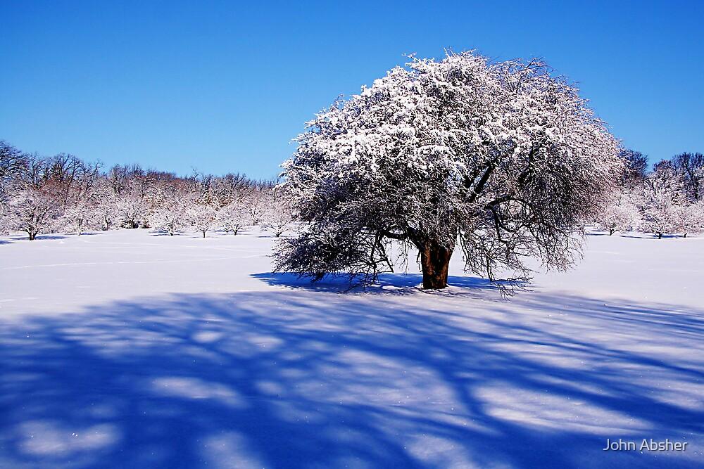 Snowy Shadows by John Absher