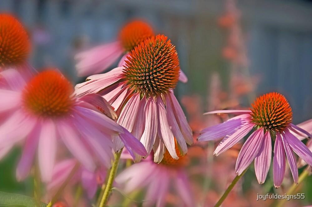 Echinacea Pallida Pink Coneflower by joyfuldesigns55