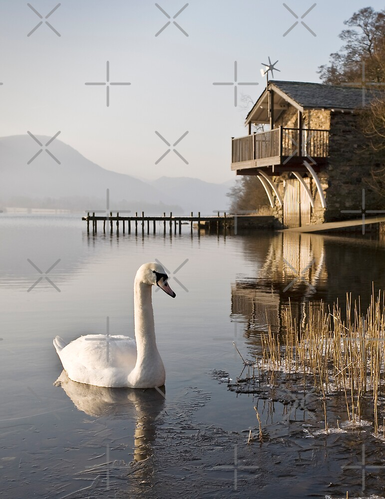 Swan on Ullswater in Winter by JulieP
