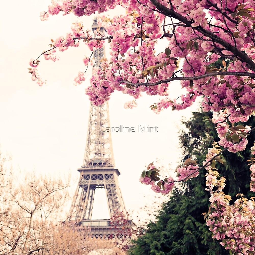 Paris, Eiffel tower and Cherry Blossoms  by Caroline Mint