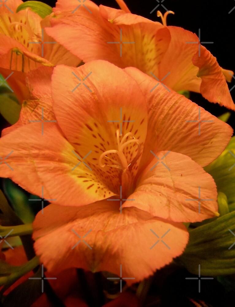 Orange Lillies by Shulie1