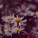 Purple Flowers by Ardisrawr