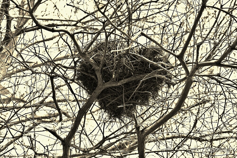 Heart-Shaped Nest by Cynthia48