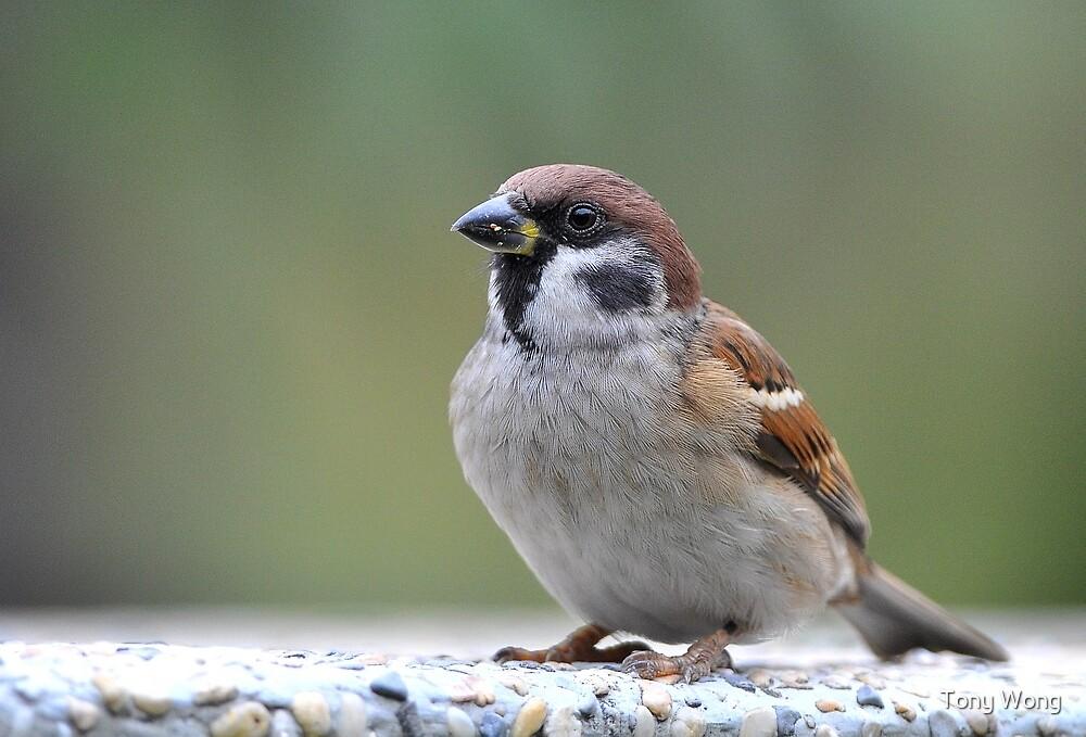 Little big bird by Tony Wong