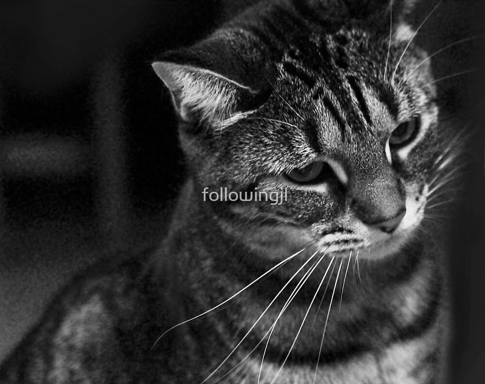 Portrait of a Cat by followingjl