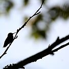Hummingbird Silhouette by Gale Ulsamer