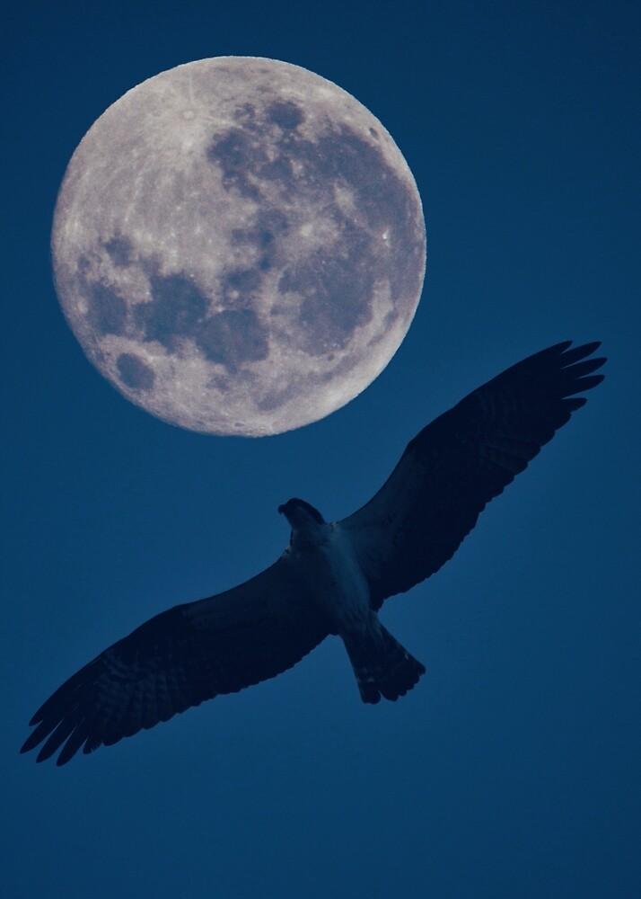 Full Moon Rising  by showmedarkness