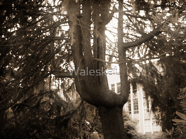 Mother Nature's Hand by WaleskaL