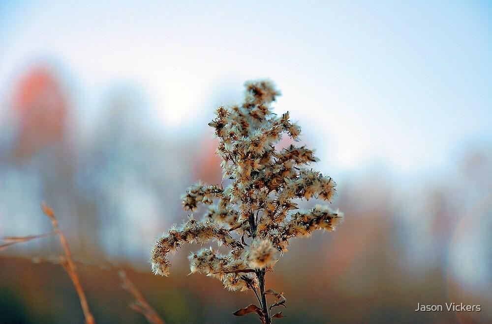 Natures Macro by Jason Vickers