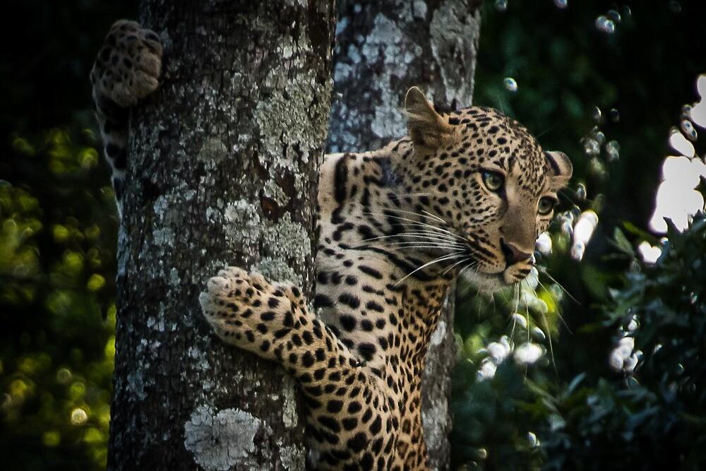 Leopard in the Masai Mara by markhgphoto