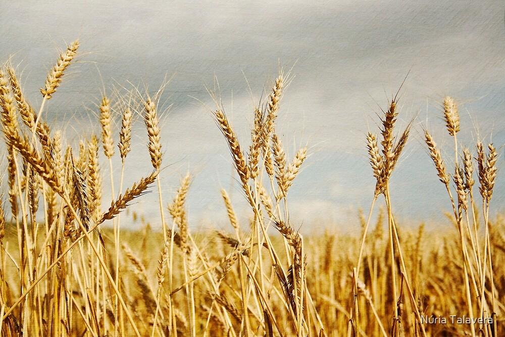 Wheat field by Núria Talavera