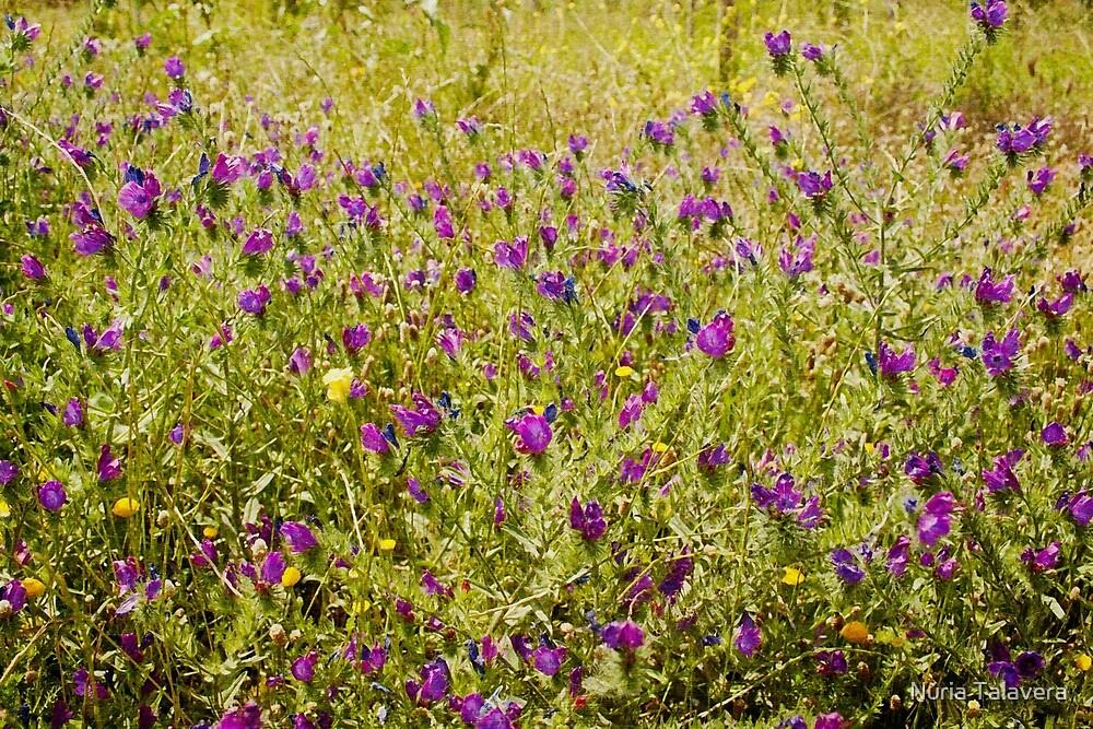 Little flowers in a field by Núria Talavera