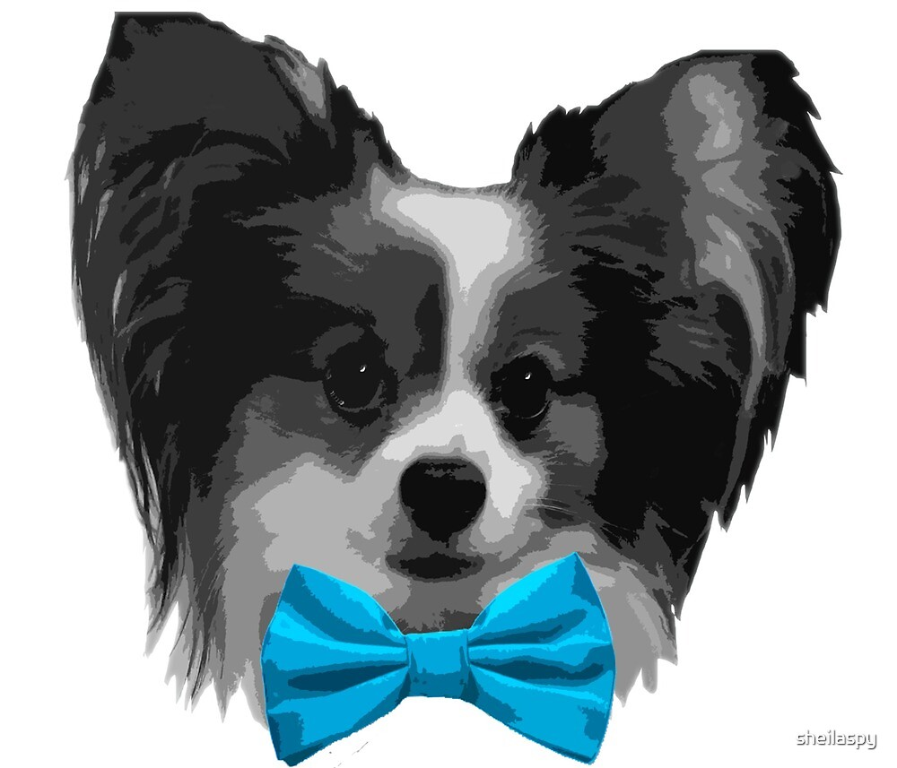 Dapper Papillon with Sky Blue Bowtie by sheilaspy