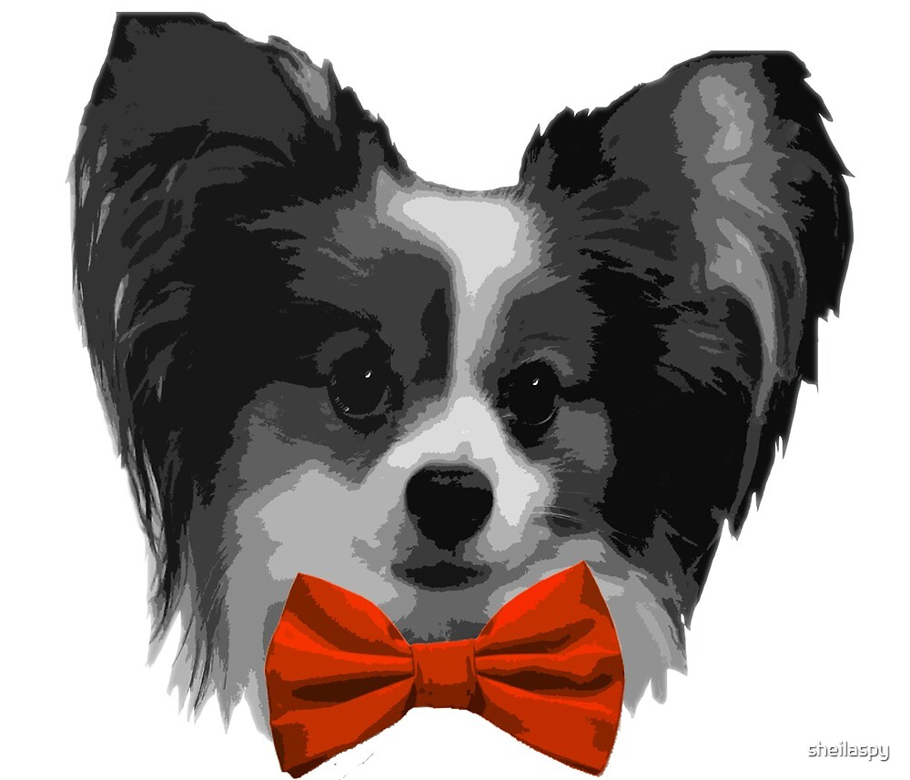 Dapper Papillon with Orange Bowtie by sheilaspy