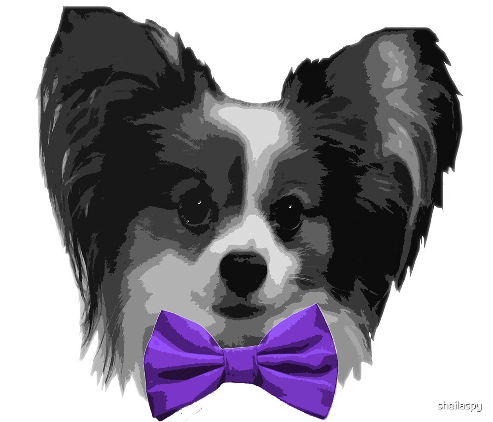 Dapper Papillon with Purple Bowtie by sheilaspy